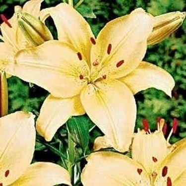 Di che tipi possono essere i fiori fiori e animali for Tipi di fiori