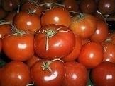 come si coltivano i pomodori