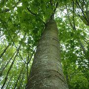 nomi alberi
