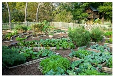 Coltivare un orto in giardino