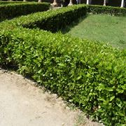Divisori in siepi per giardini