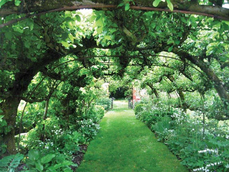 Pergolato giardino verde
