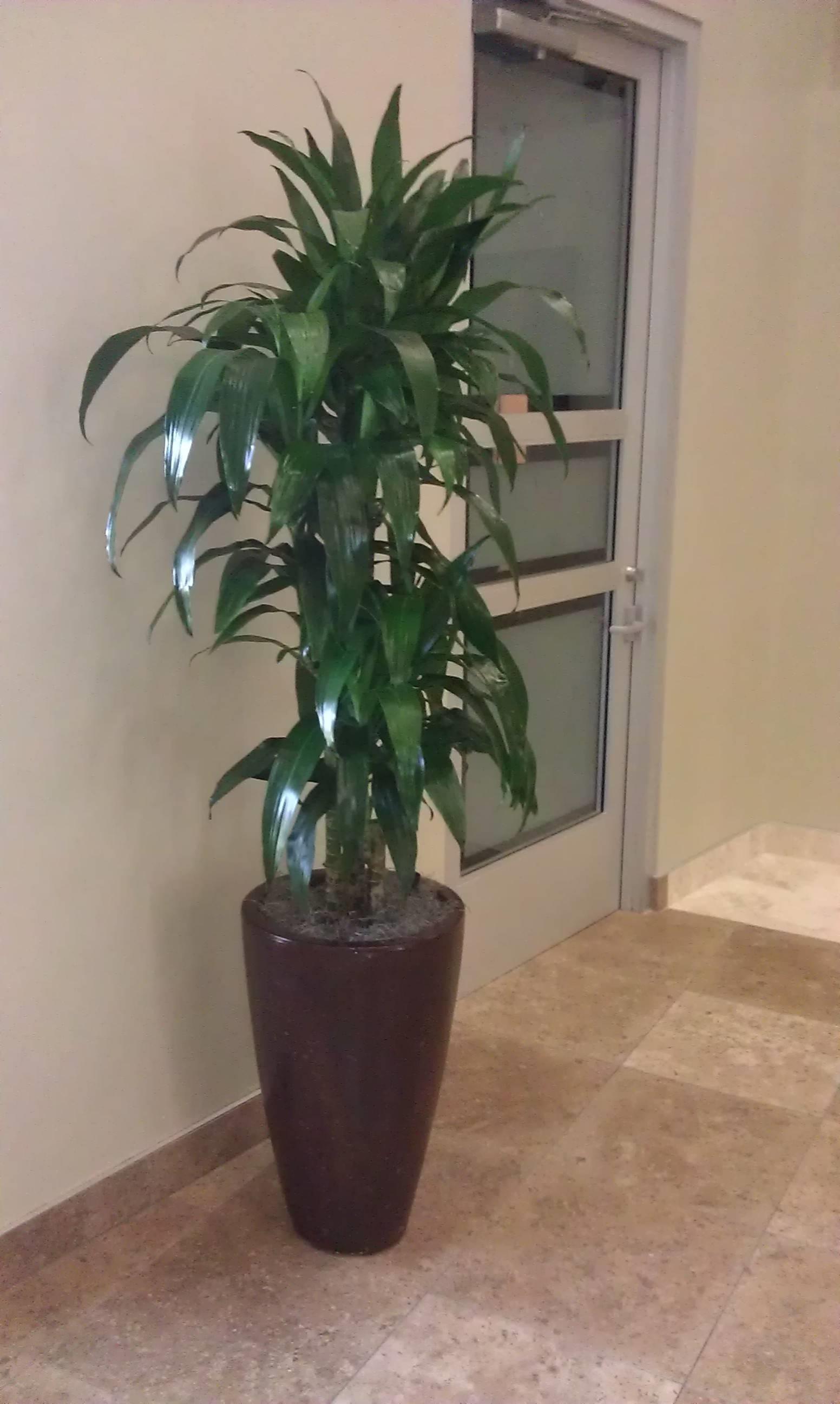 Contenitore per piante vasi e fioriere contenitore per le piante - Piante per giardino ...
