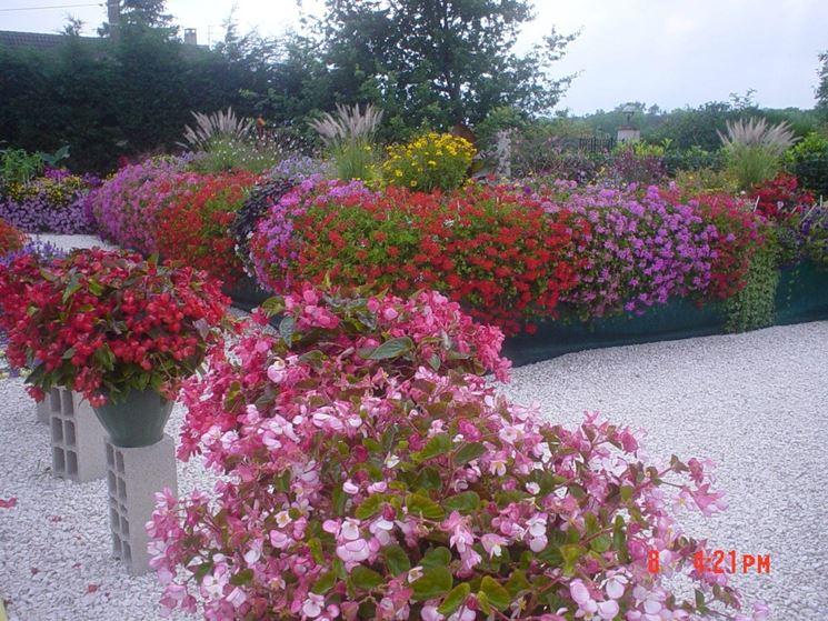 Piante per fioriere di differenti colori
