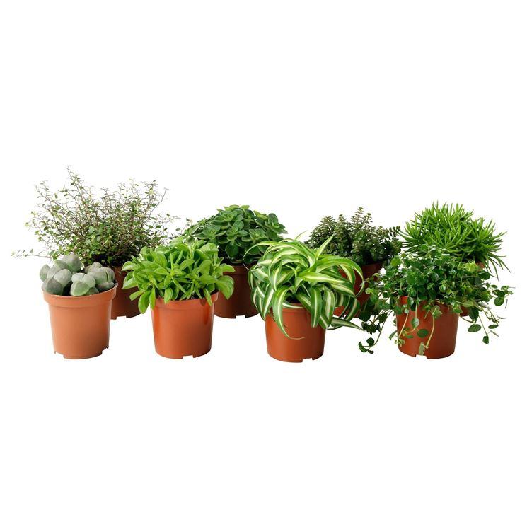 Piante da vaso - vasi e fioriere - Piante da vaso giardino