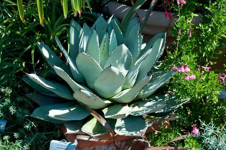 Piante da vaso vasi e fioriere piante da vaso giardino for Piante da comprare