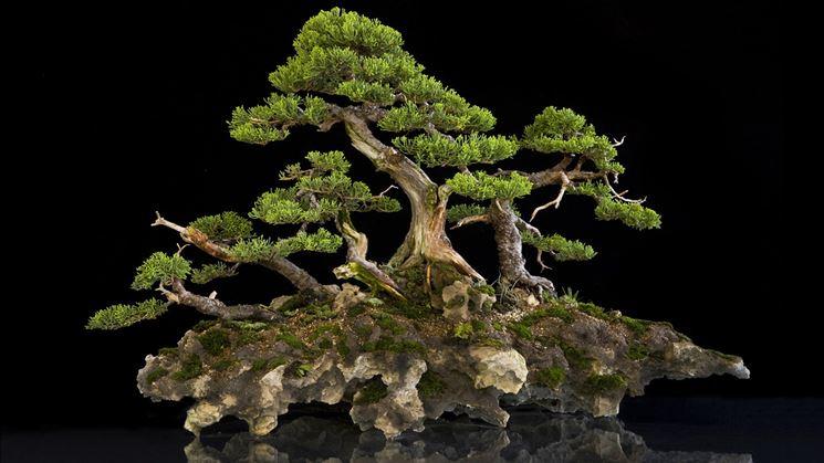 bonsai italia