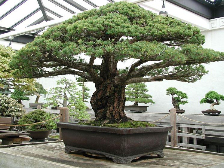 Bonsai prezzi - Coltivare bonsai - Informazioni bonsai prezzi