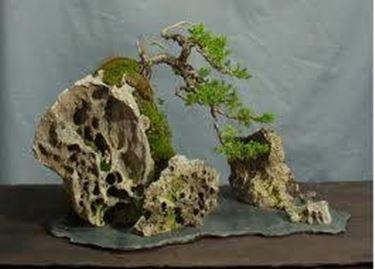 bonsai su roccia
