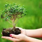 coltivarebonsai