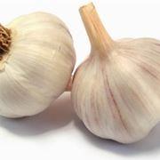coltivare aglio