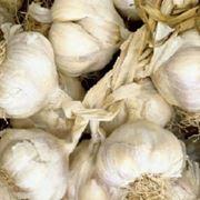 ipertensione aglio