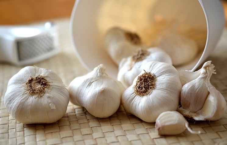 spicchio d'aglio2