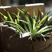 pianta aloe vera in casa