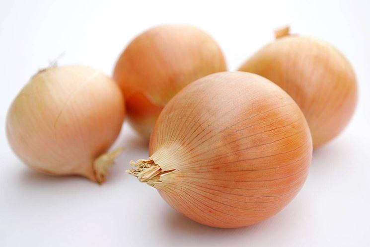 Cipolla bionda