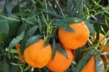 arancioamaro2