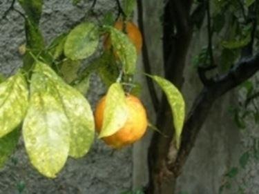 arancioamaro