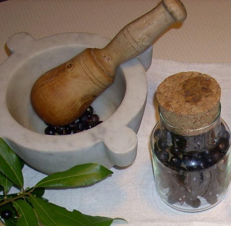 materiale per olio di bacche di alloro