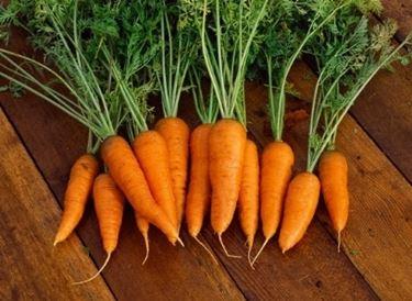 carota2