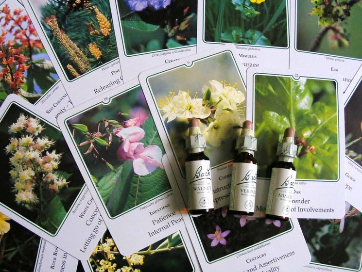 Carte per terapia florale