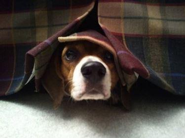 I nostri amici animali si spaventano per il temporale, i fuochi d'artificio, il veterinario...