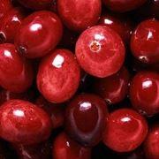 mirtillo rosso proprietà