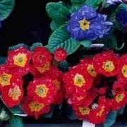 Piante perenni in pieno sole da vaso for Fiori pieno sole perenni