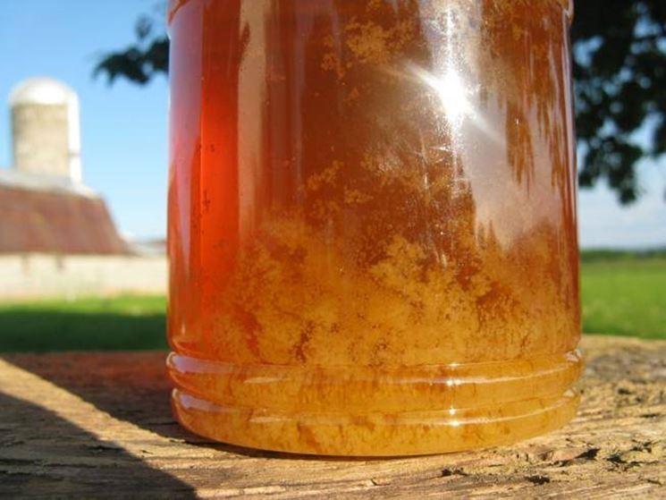 Aspetto del miele cristallizzato
