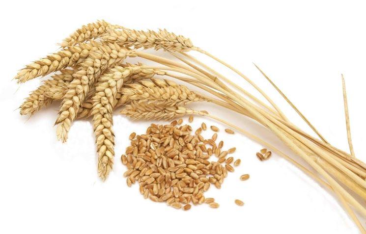 olio di germe di grano2