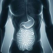 apparato gastro-intestinale