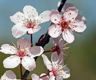 fiori di piante