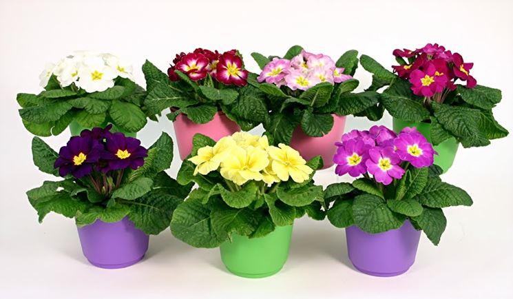 alcuni vasi