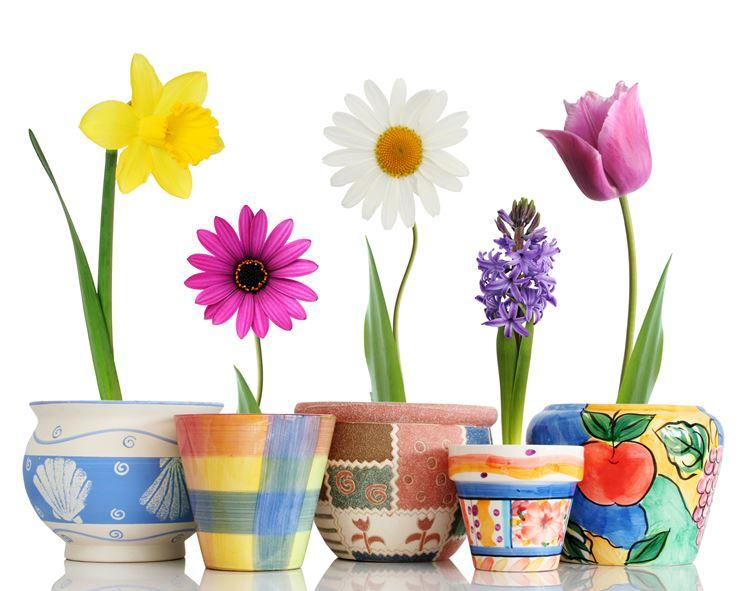 vasi di fiori colorati