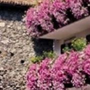 Cura dell 39 ibisco domande e risposte fiori for Petunie perenni