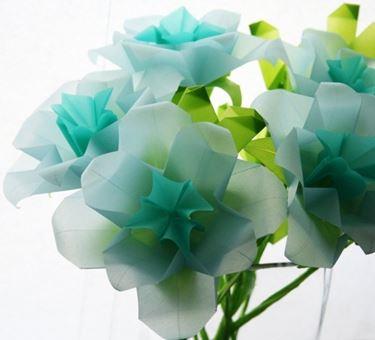 fiori con velina