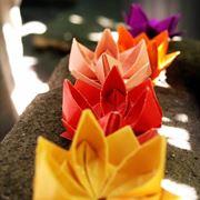Fiori di loto decorativi