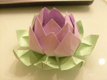Sequenza di piegatura del fiore di loto