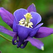 pianta dai fiori a grappoli come si chiama
