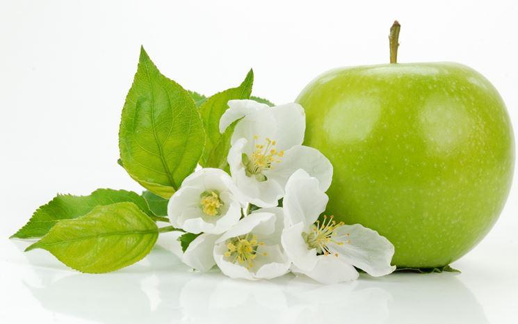fiori mela verde