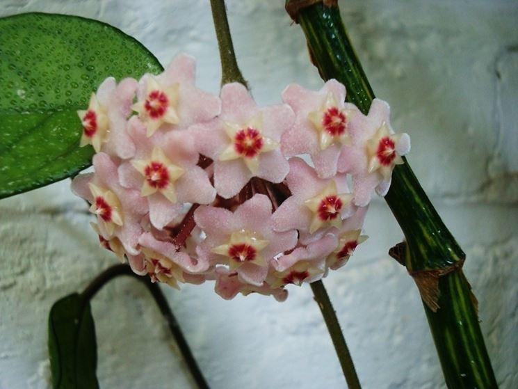 Esemplare fiore cera