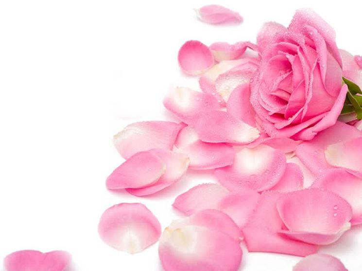 petali rosa rosa