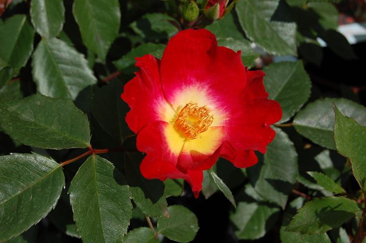Colori rosa
