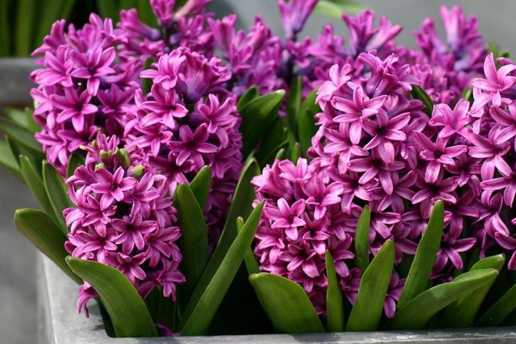 spesso Tipi di fiori - fiori di piante - Caratteristiche dei tipi di fiori WW62