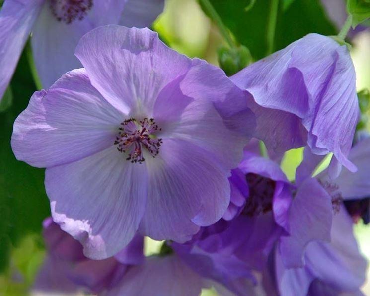 Tipi di fiori fiori di piante caratteristiche dei tipi for Tipi di fiori