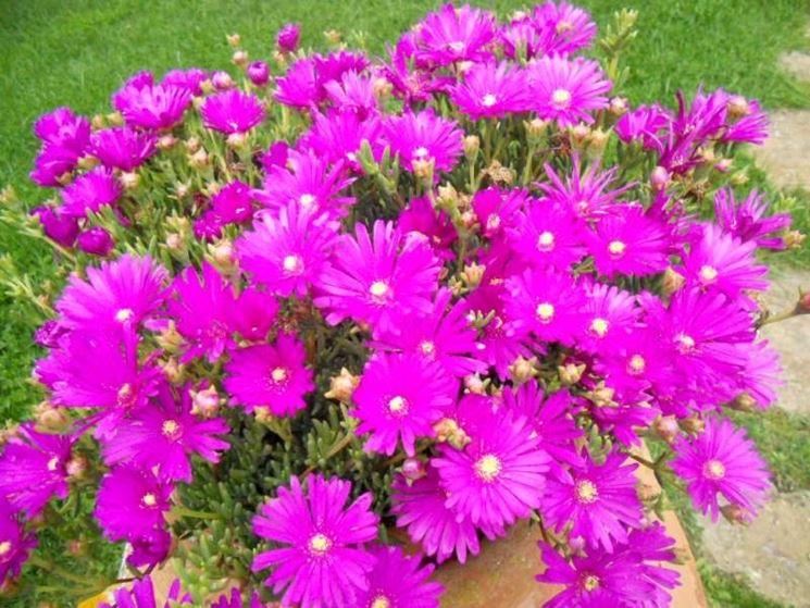 Acquisto piante online fiorista comprare online le piante for Piante da comprare