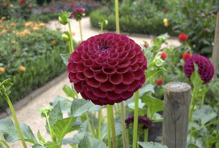 Comprare piante fiorista acquisto piante fioristi for Acquisto piante