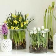 Esemplari di piante da appartamento.