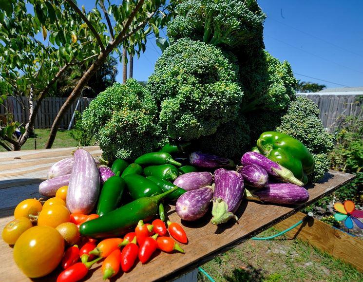 Verdure di un orto biologico.