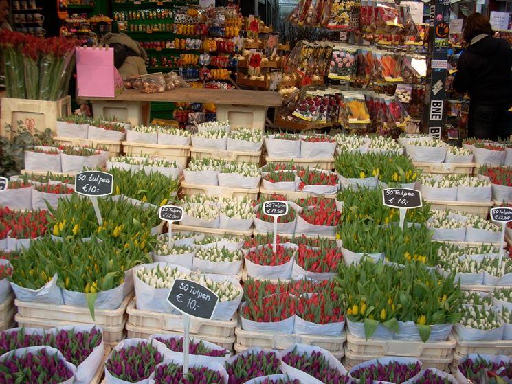 Distesa di tulipani da un fioraio