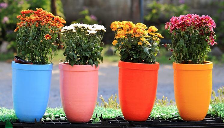 Fiori da vaso - Fiorista - Fiori per vaso
